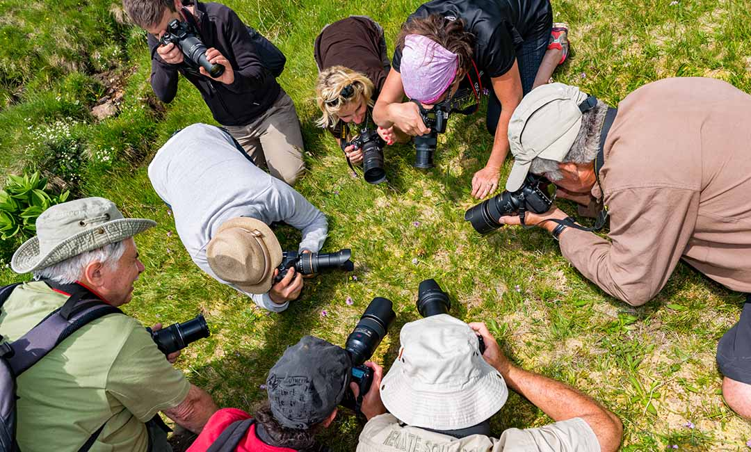 venez apprendre la photographie en stage, en safari, en cours, avec Alain Pons Photographe